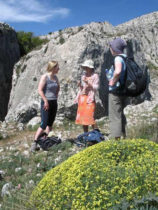 Flower blossom near the summit