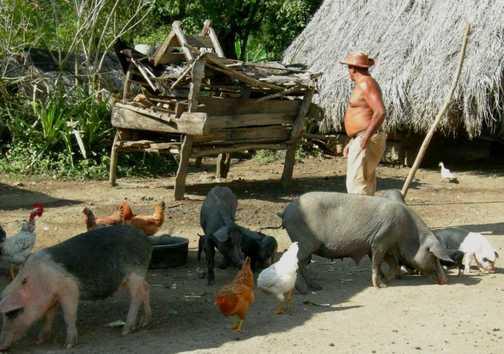 typical mountain farm