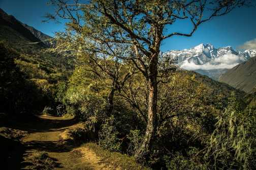 Autumn in the Himalayas