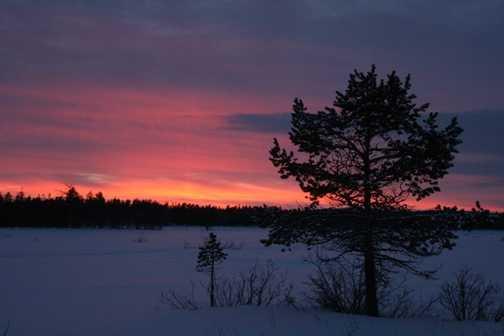 Oulanka Sunset