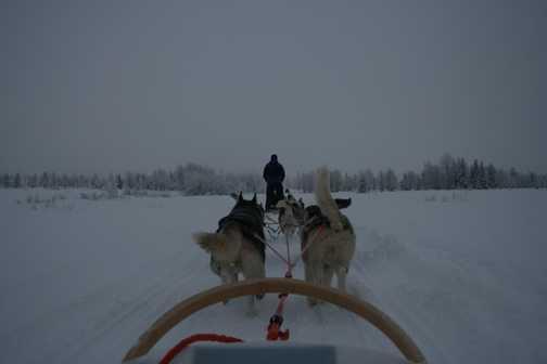 Long Dog-Sled trip
