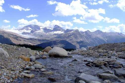 Mountain Gentian