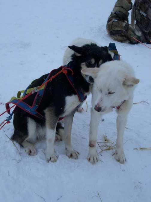 Huddled Dogs