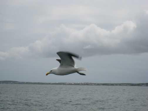 bird in flight -