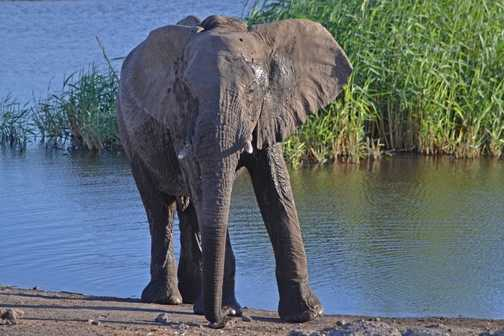 Our first elephant sighting