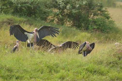 Vultures (I think)