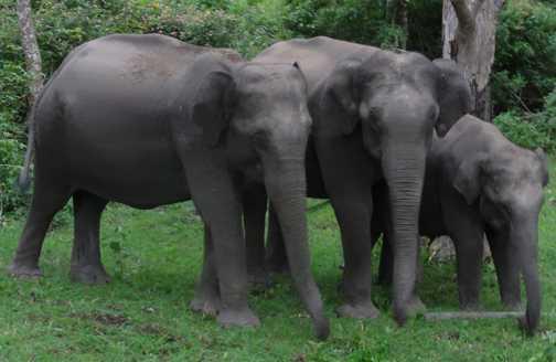 Elephants came to say hello
