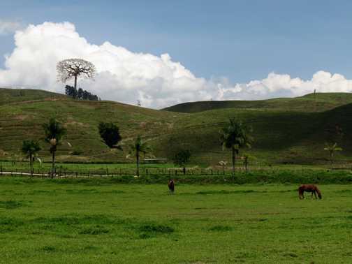 near Tucurrique