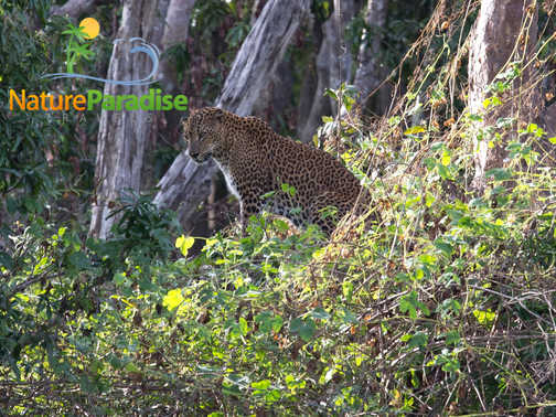 sri lanka wild life safari