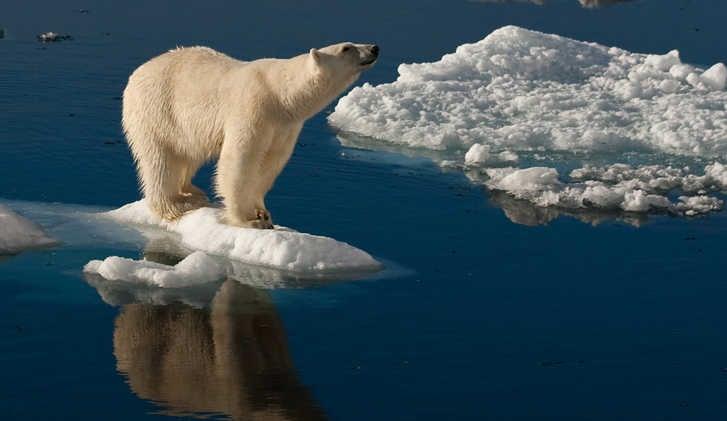 Spitzbergen, Polar Bear