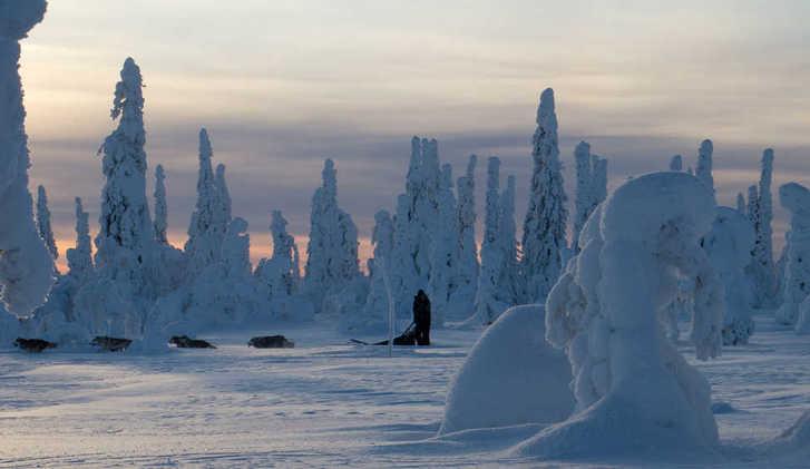Dogsledding through snow-capped trees, Riisitunturi National Park, Finland (photo by Erkki Ollila)