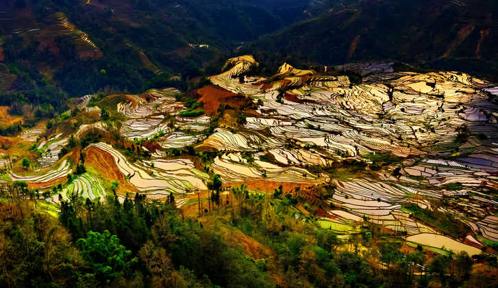 Terraced rice fields in Yuanyang County