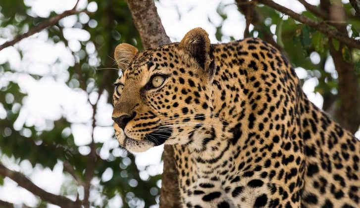 Wildlife Holidays in Kenya, Wildlife Trips to Kenya