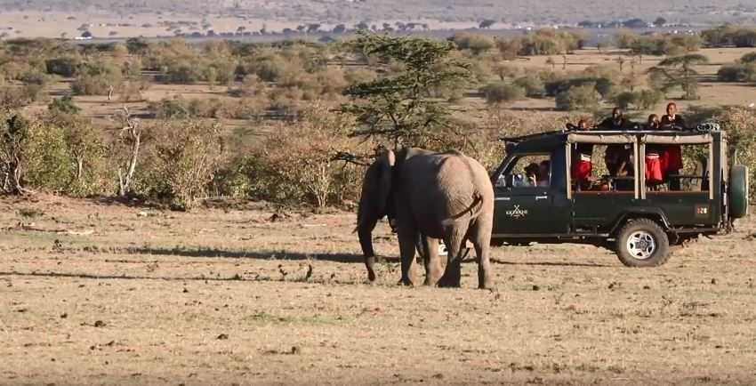 Elephants on the game drive