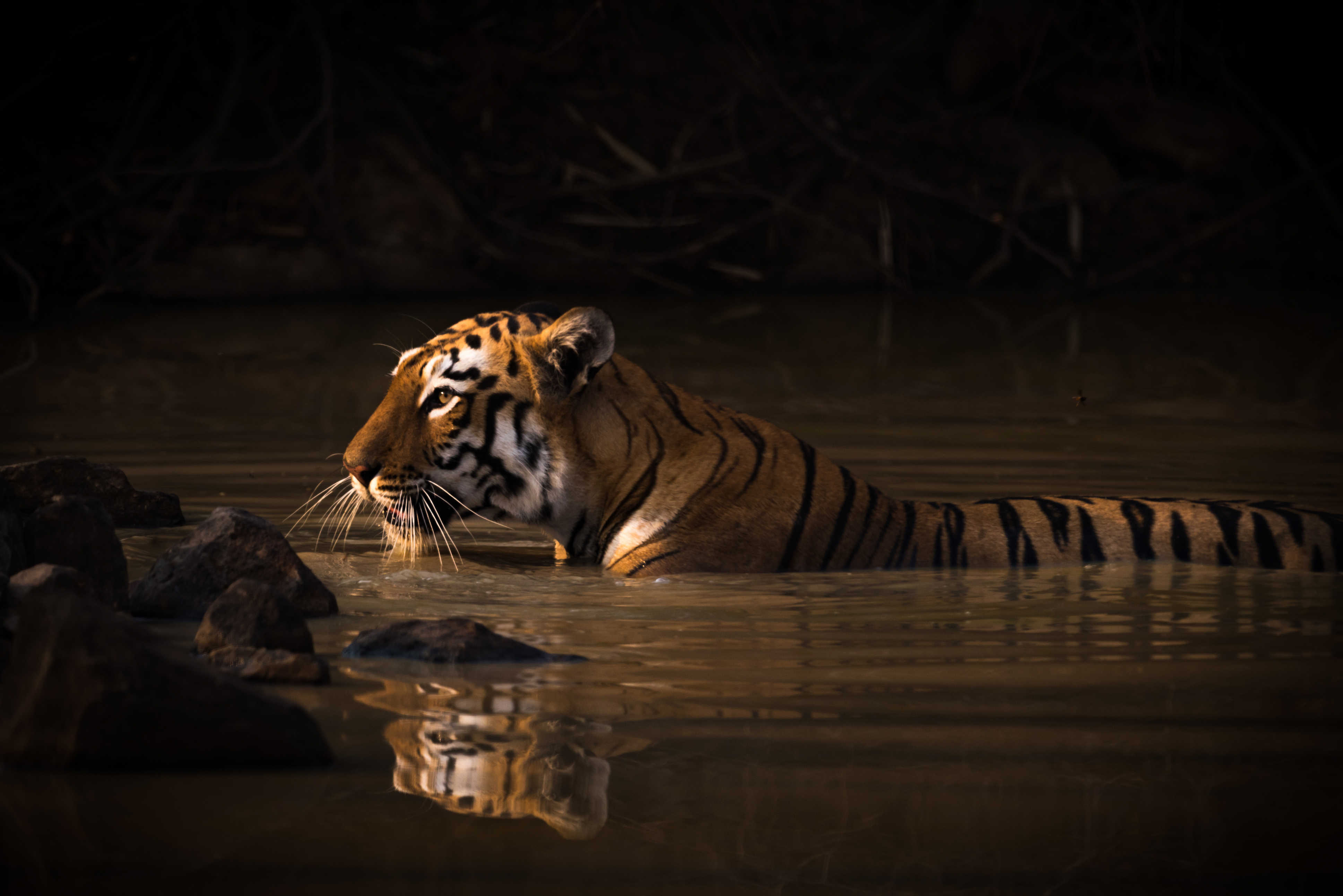 Nick Dale's winning image, taken in India